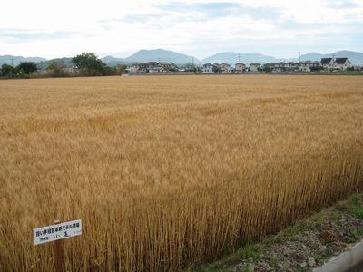 fukuhonokakomugi1.jpg